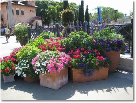 gallery for gt potted flower arrangements outdoors