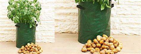Patio Potato Planters by Potato Patio Planter The Green