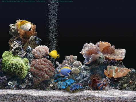 serenescreen marine aquarium download serenescreen marine aquarium demo en download chip eu
