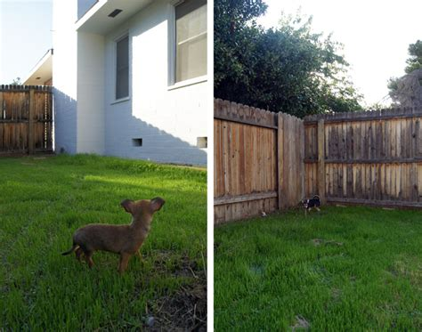 which side of house is my fence which side of house is my fence 28 images 25 best ideas about arbor gate on yard