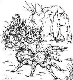 Giant Tarantula Spider Coloring Sheet Tarantula Coloring Page