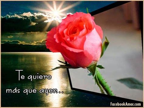 de 6 rosas rojas amor twitter facebook google descripcin con rosas m 225 s de 25 ideas incre 237 bles sobre rosas con frases bonitas