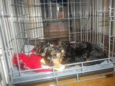 modern puppy apartment 1000 images about puppy apartment reviews on potty trains and