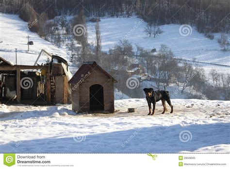 dog house for rottweiler rottweiler house royalty free stock photo image 28508565