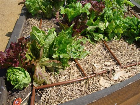 repair drip irrigation guide how to fix it yourself pro
