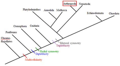 classification scolopendra subspinipes