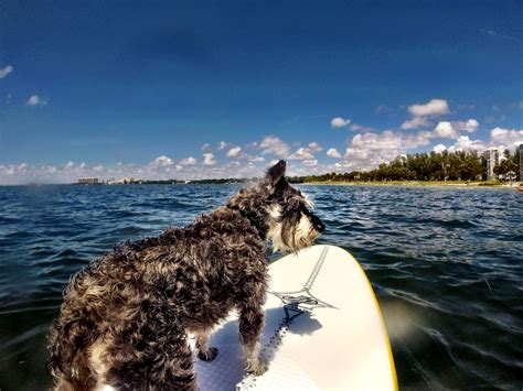 pet friendly places to stay dog cat and horse friendly dog friendly hotels in sanibel and captiva island