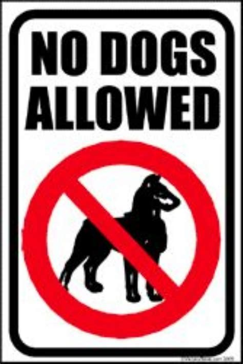 no dogs allowed no dogs allowed ruairi og clg