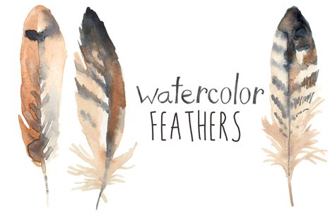 water color feather watercolor feathers illustrations on creative market
