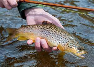 Faq fly fishing for the beginner