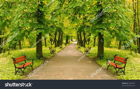 beautiful in beautiful park alley summer stock photo 53897587