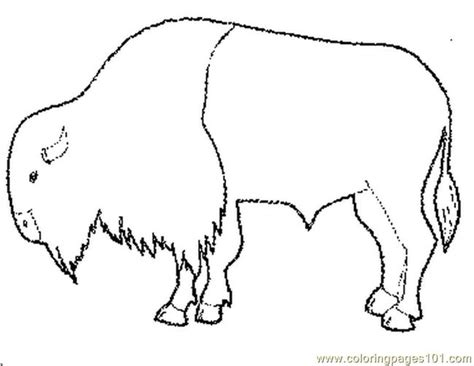 african buffalo coloring page buffalo bison coloring