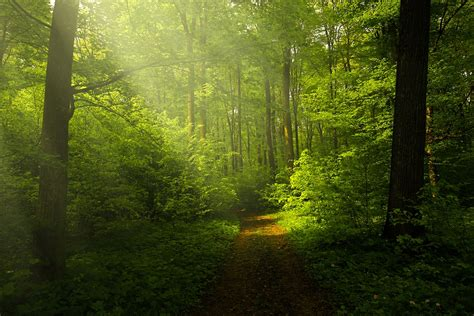 landscape light free photo light forest rays landscape free image on