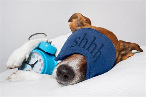 gesund schlafen gesund schlafen 7 vitale gewohnheiten f 252 r maximale power