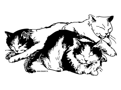 sleepy cat coloring page free coloring pages of sleeping cat