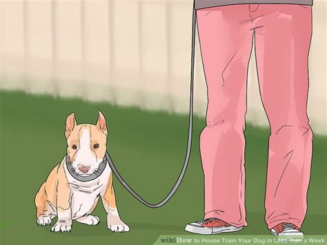 best way to house train an older dog 3 ways to house train your dog in less than a week wikihow