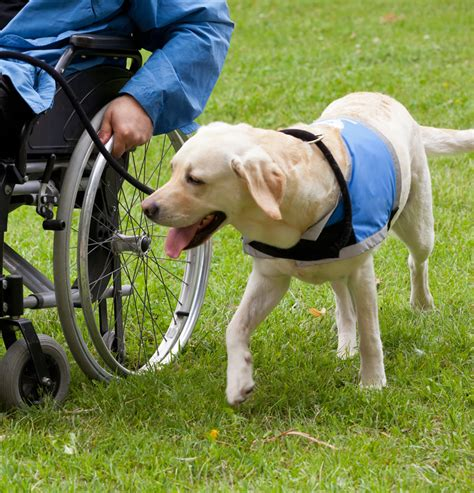 i want to service dogs service sam k 9 consultants services