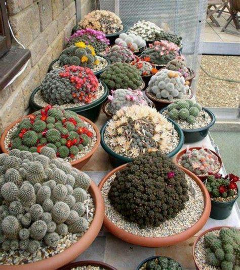 cactus container garden cactus container garden container gardening
