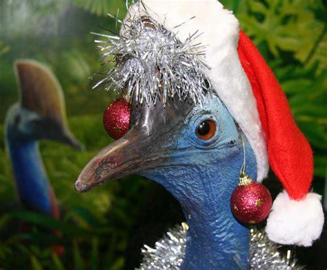 merry christmas cassowaryrecoveryteam