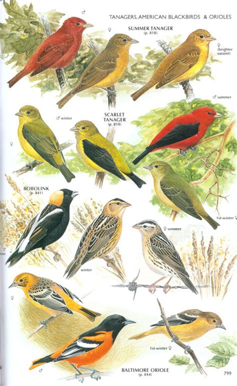 illinois bird identification quotes