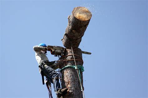 tree in fresno tree service in clovis ca cut it right tree service