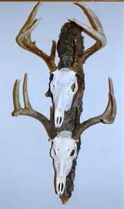 Pin elk european mount on pinterest