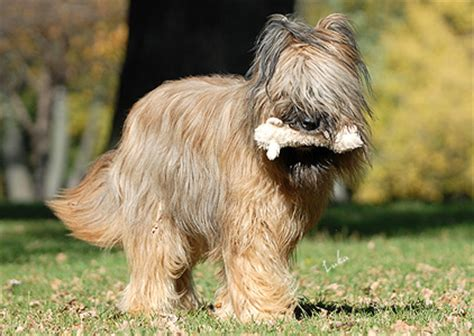 haired big dogs large breeds hair