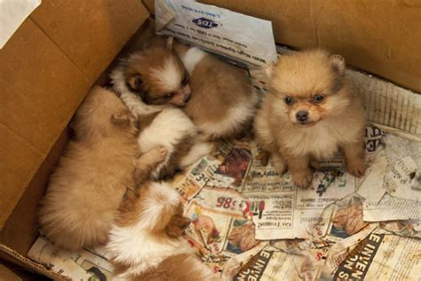 puppy finder florida dogs rescued from puppy mill find new lives in south florida nbc 6 south florida