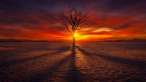 lonely tree   sunset hd wallpaper wallpaper studio  tens  thousands hd  ultrahd