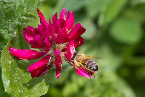 della fiore honey 4 tipi di miele 4 rimedi per la pelle