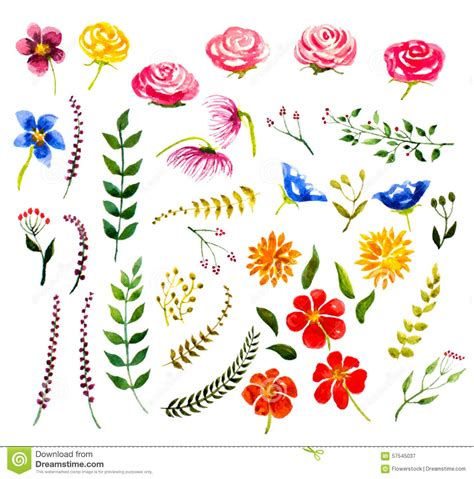 design elements watercolor set of watercolor floral design elements stock vector