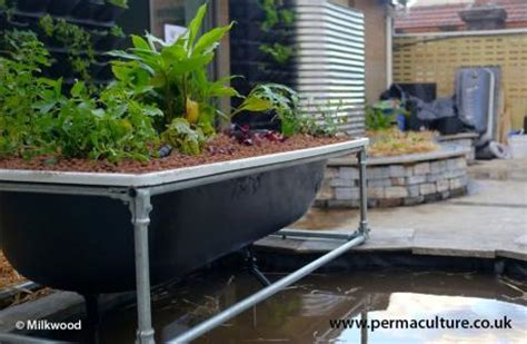 bathtub aquaponics aquaponics in a bathtub permaculture magazine