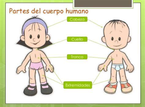 imagenes figurativas del cuerpo humano top imagenes del cuerpo humano y sus partes wallpapers