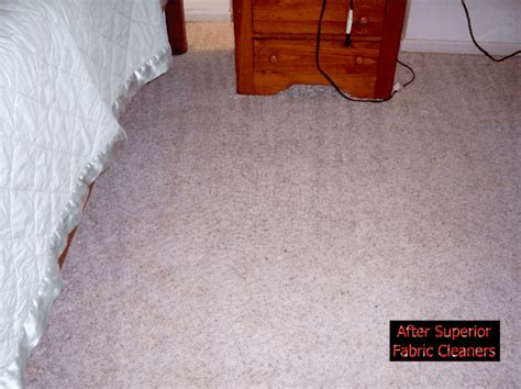 cat pooping on rug how to clean carpet airglidecarpetcleaning