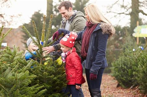 where to buy real christmas trees in leeds and bradford