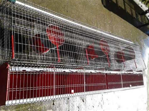 gabbie per allevamento conigli gabbie professionali per conigli a palermo kijiji