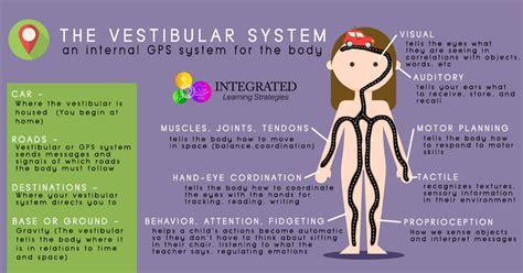 vestibular nerve definition vestibular system your child s internal gps system for