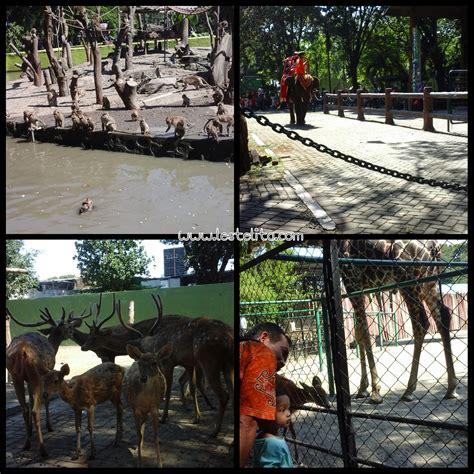 Tenda Anak Gajah mengunjungi kebun binatang surabaya sambil belajar
