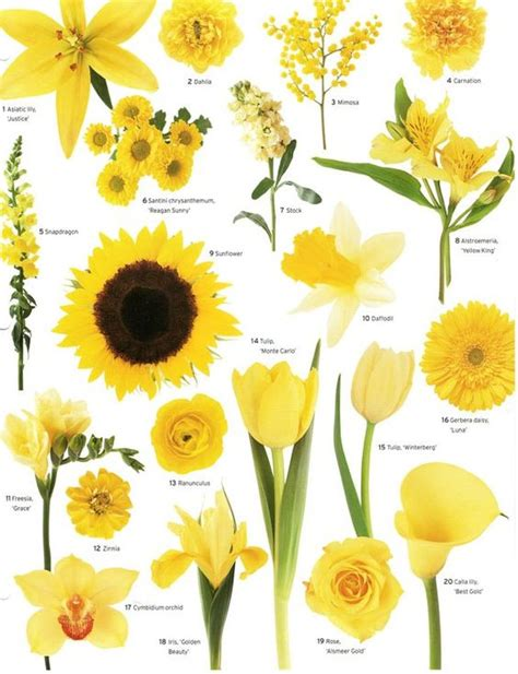 a florist is advertising five types of bouquets flower types flower and yellow flowers on pinterest