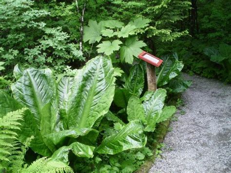 beautiful tropical forest and small stream picture of juneau rainforest garden juneau