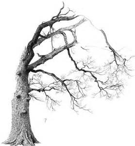 how to draw a dead tree cliparts co