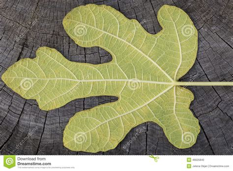 stump pattern new leaf leaf stock photo image of flora pattern botanical