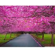 Nature Wallpaper Spring – Best Download