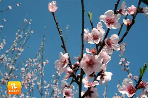 meteo co dei fiori 15 giorni meteo 1 marzo inizia la primavera meteorologica 187 ilmeteo it