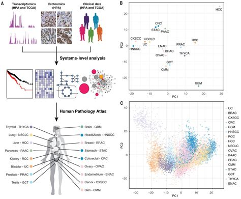 pattern analysis of tumors a pathology atlas of the human cancer transcriptome science