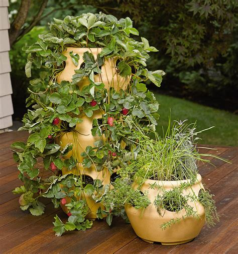 herbs planter stackable strawberry and herb planters the green head
