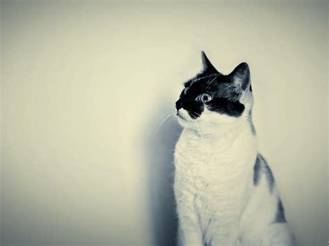 imagenes hd hipster hipster cat hd fondo de pantalla fondos de pantalla gratis
