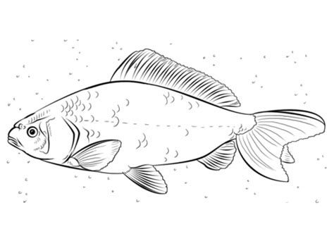 coloring page of catfish gallery