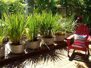 potted plants patio privacy how to customize your outdoor areas with privacy screens