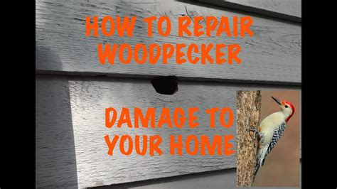 woodpecker damage repair youtube